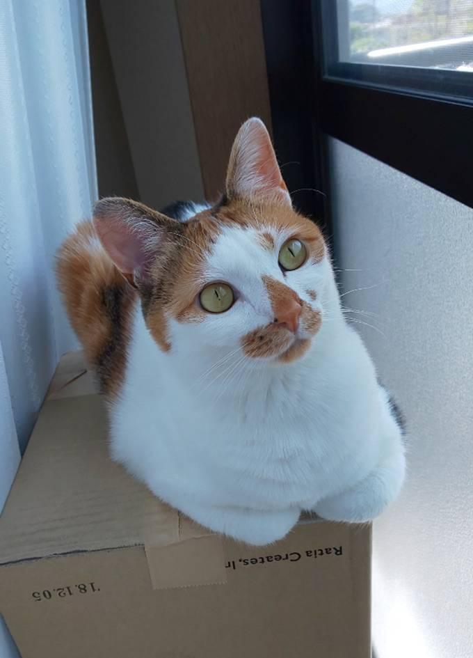 猫 ねこ キャット ぷりん プリン 保護猫 Aurora&Oasis オーロラ&オアシス スワロフスキー アクセサリー